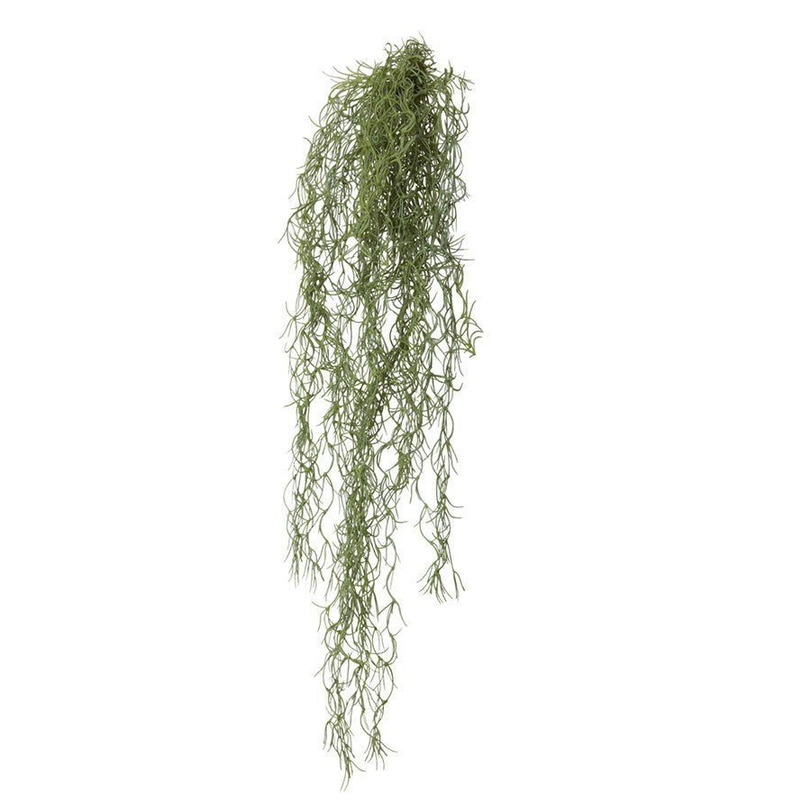 General Eclectic | Old Man's Beard | Shut the Front Door