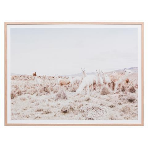 Middle of Nowhere | Framed Print Llama Landscape | Shut the Front Door