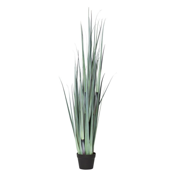 General Eclectic | Onion Grass | Shut the Front Door