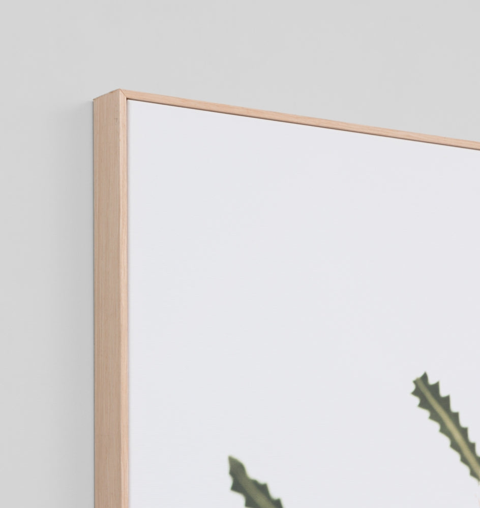 Middle of Nowhere | Framed Canvas Banksia | Shut the Front Door