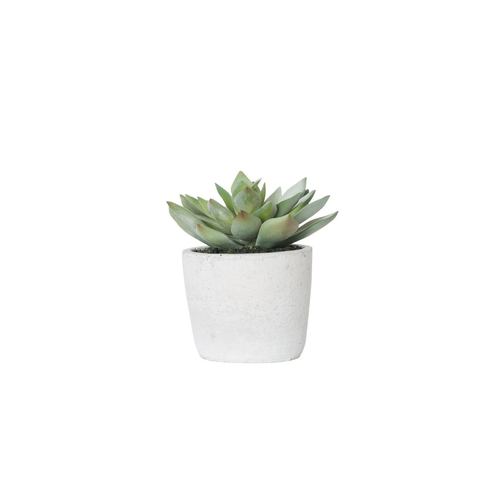 General Eclectic | Plant Echeveria Small | Shut the Front Door