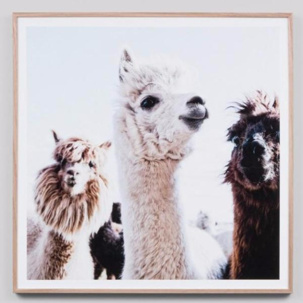 Middle of Nowhere | Frame Print Llama Friends | Shut the Front Door