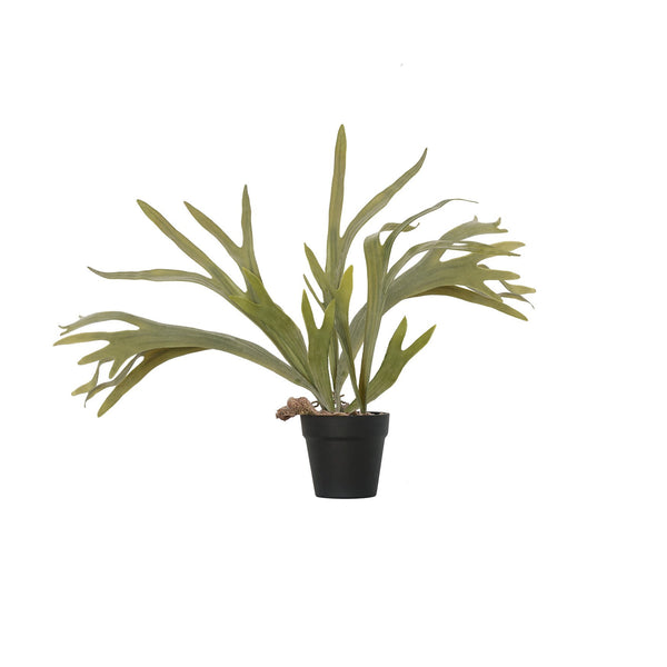 General Eclectic | Plant Staghorn Fern Pot Plant | Shut the Front Door
