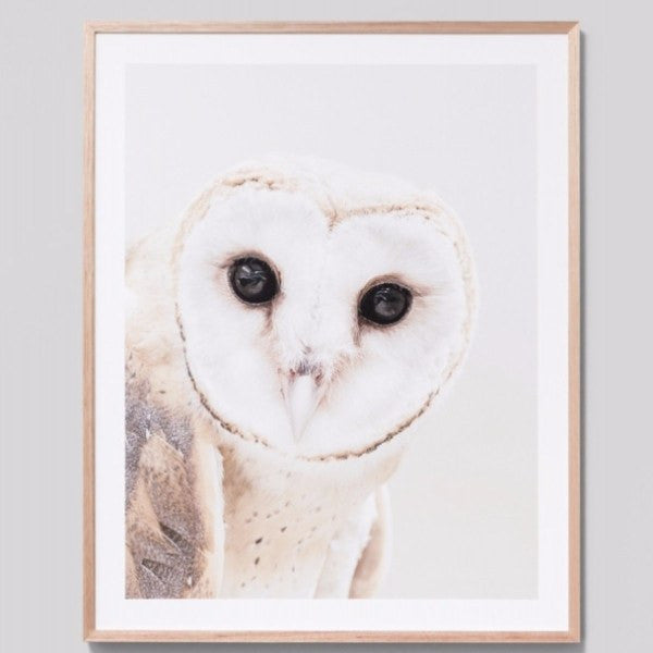 Middle of Nowhere | Framed Print Curious Owl | Shut the Front Door