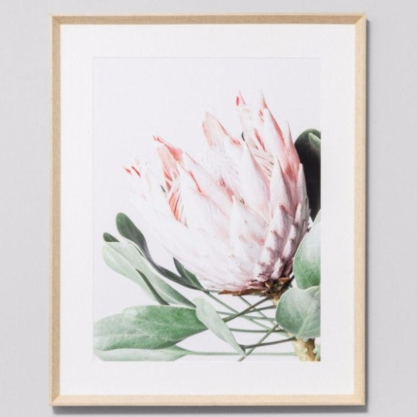 Middle of Nowhere | Framed Print Protea Flower | Shut the Front Door