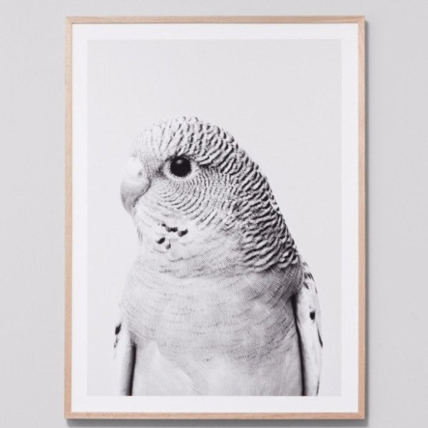 Middle of Nowhere | Framed Print Budgie Grey | Shut the Front Door