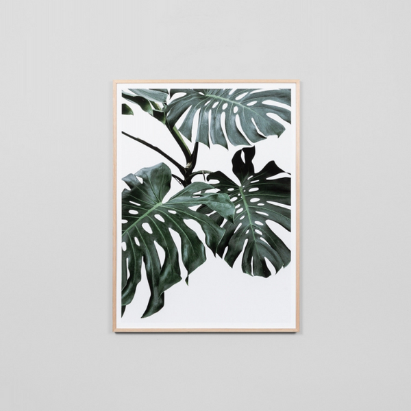 Middle of Nowhere | Monstera Portrait K-Raw | Shut the Front Door