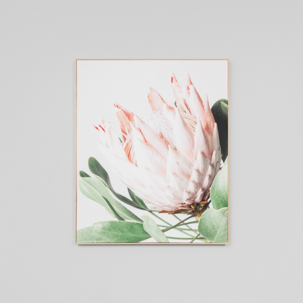 Middle of Nowhere | Framed Canvas Protea Flower | Shut the Front Door