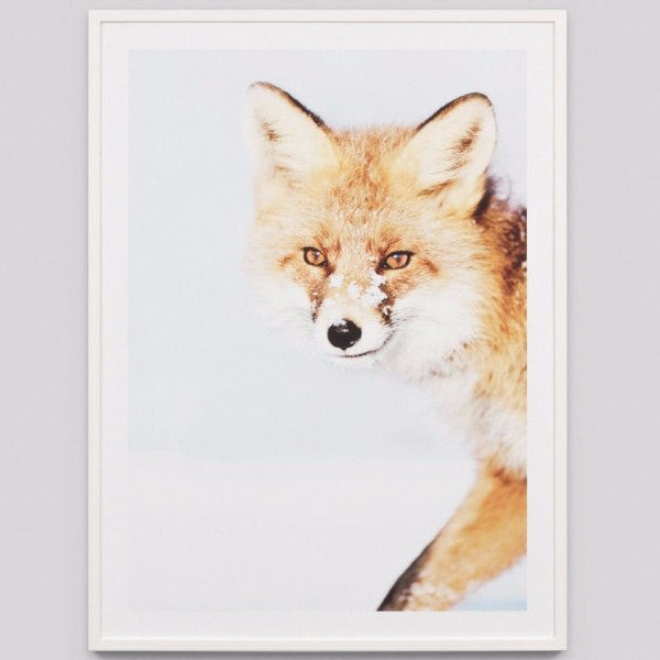 Middle of Nowhere | Framed Print Snowy Fox | Shut the Front Door