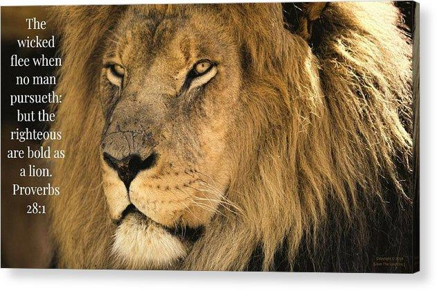 Bold As A Lion - Acrylic Print - Love the Lord Inc