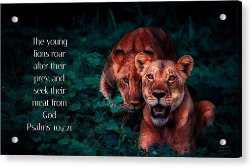 Lions Seek Food From God - Acrylic Print - Love the Lord Inc
