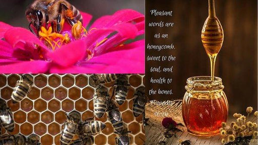 Pleasant Words And Honey - Art Print - Love the Lord Inc