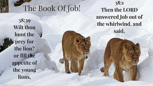 The Book Of Job 2lions - Art Print - Love the Lord Inc