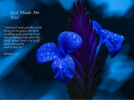 Beautiful Blue - God Made Me Too - Art Print - Love the Lord Inc