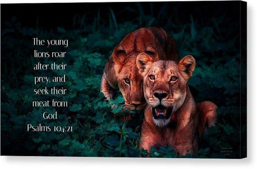Lions Seek Food From God - Canvas Print - Love the Lord Inc