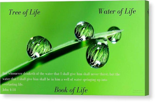 Tree Water Book Of Life Water Drops - Canvas Print - Love the Lord Inc