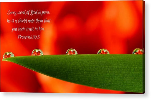 Every Word of God Pure Org - Acrylic Print - Love the Lord Inc