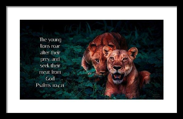 Lions Seek Food From God - Framed Print - Love the Lord Inc