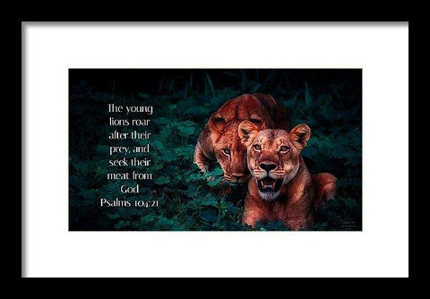 Framed Print - Lions Seek Food From God - Framed Print
