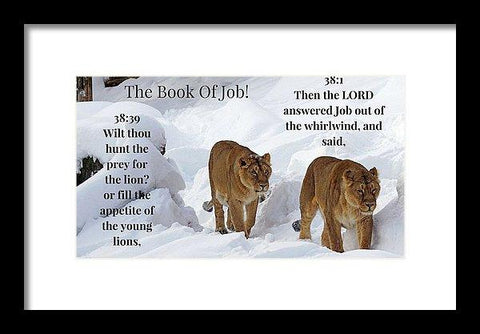 Framed Print - The Book Of Job 2lions - Framed Print