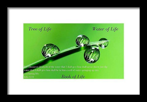 Framed Print - Tree Water Book Of Life Water Drops - Framed Print
