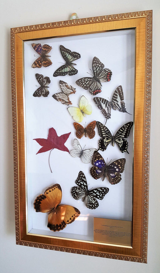 Christian Wall Art - God Created Butterflies - Love the Lord Inc