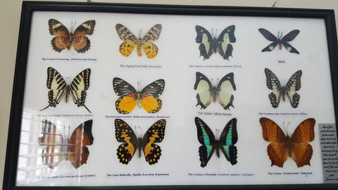 Wall Art - Framed Butterflies - 12 Piece Set