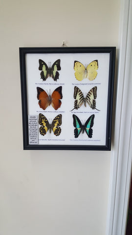 Wall Art - Framed Butterflies - 6 Piece Set