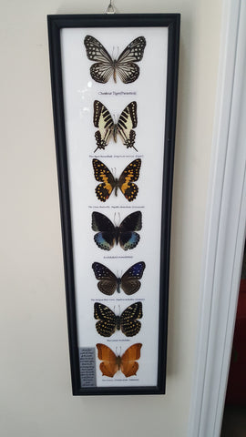 Wall Art - Framed Butterflies - 7 Piece Set