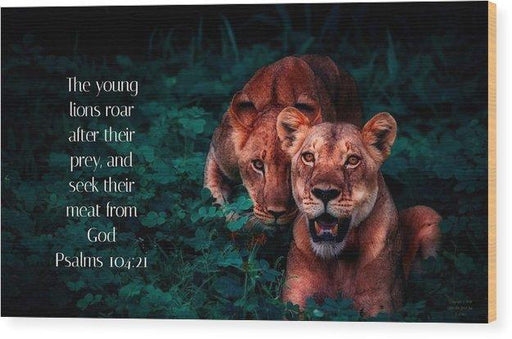 Lions Seek Food From God - Wood Print - Love the Lord Inc