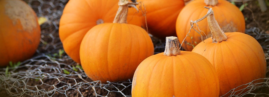 Picking the perfect pumpkin for baking