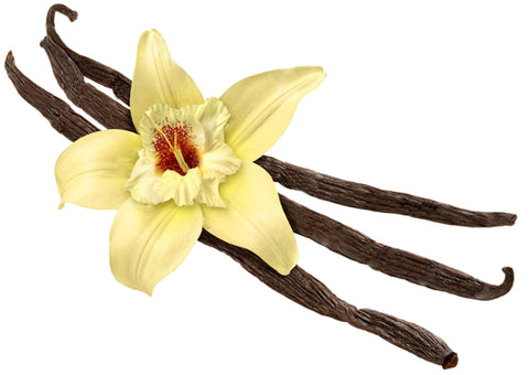 Vanilla Bean Flower