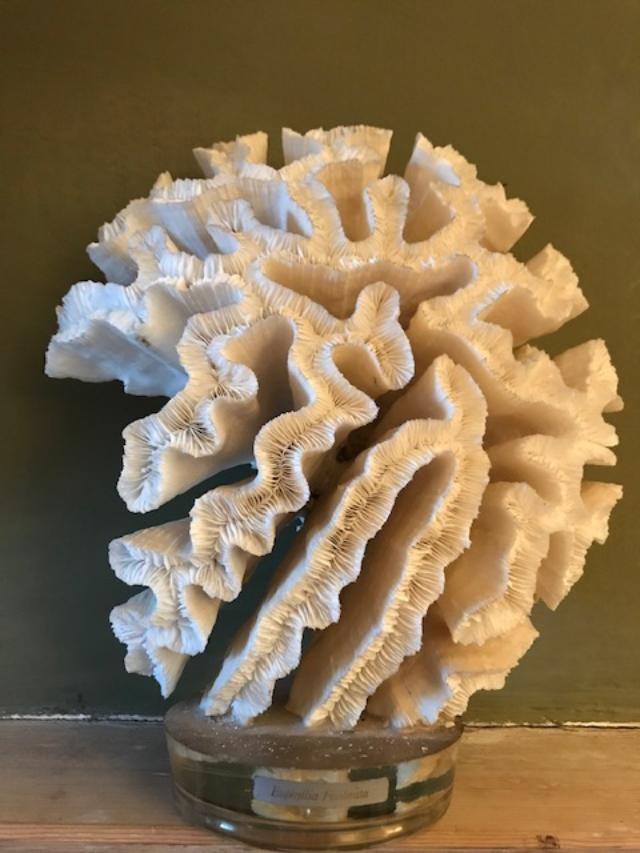 Mounted Coral