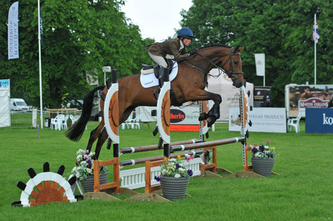 How MSM benefits the Competition Horse – Horse Supplements