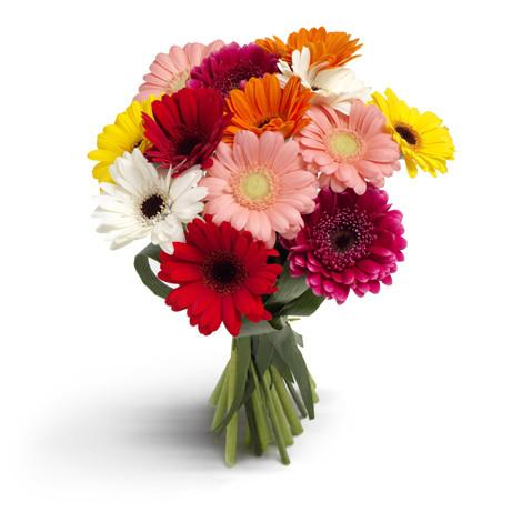 Bouquet made of mixed colours germini, Gerberas in Trinidad Tobago.