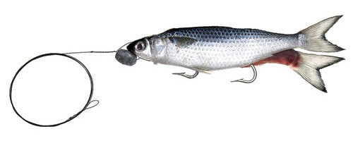Rigged Split Tail Mullet