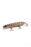Red Mayan Cichlid /Top Water - Tackle Kraft