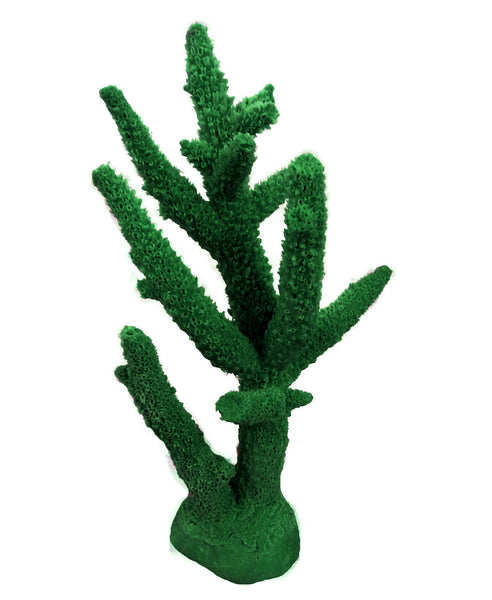 NEW NEW Acropora Cervicornis - Staghorn Coral #01102