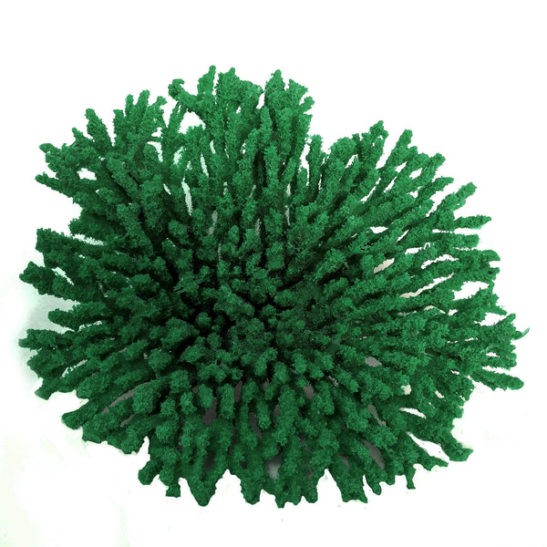 SCRATCHnDENT Acropora Cytherea - Table Coral #01501