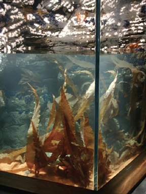 Pangea America synthetic Devil's apron kelp in an exhibit at the Ozeaneum Stralsund Germany