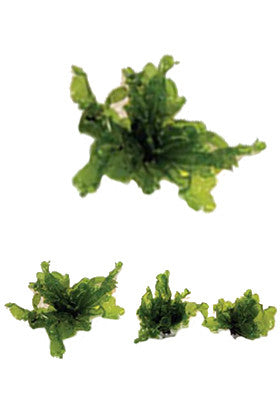 Product image-Pangea America synthetic giant sea lettuce size options