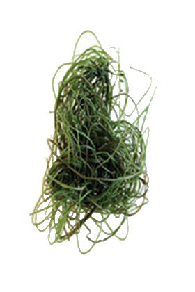 Product image-Pangea America synthetic spaghetti algae