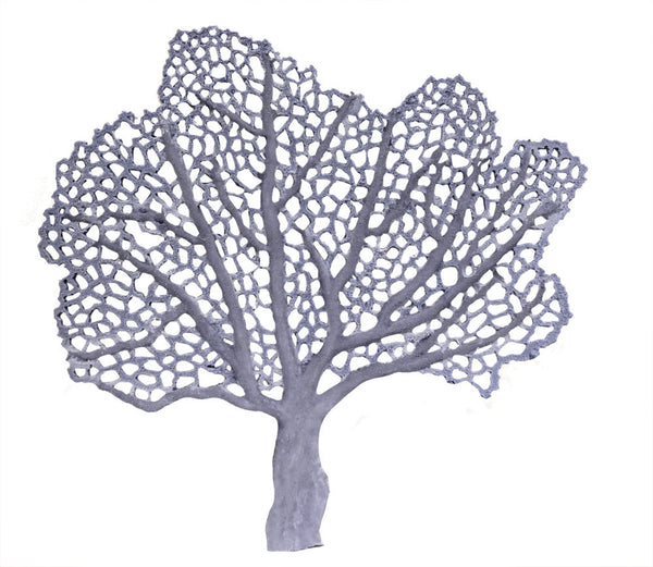 SCRATCHnDENT Gorgonia flabellum - Sea Fan - #51601