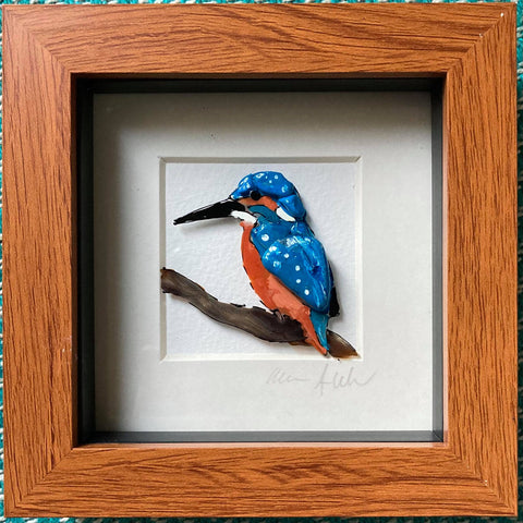 Boxy Kingfisher