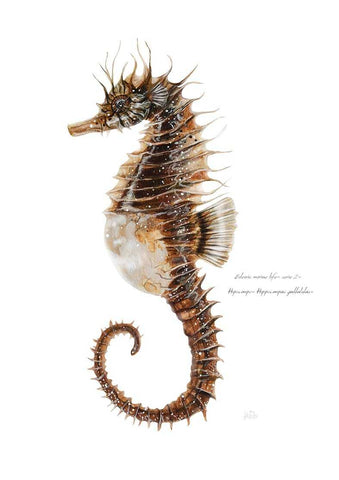 Hippocampus Art Title - Online Art Shop Brighton, UK