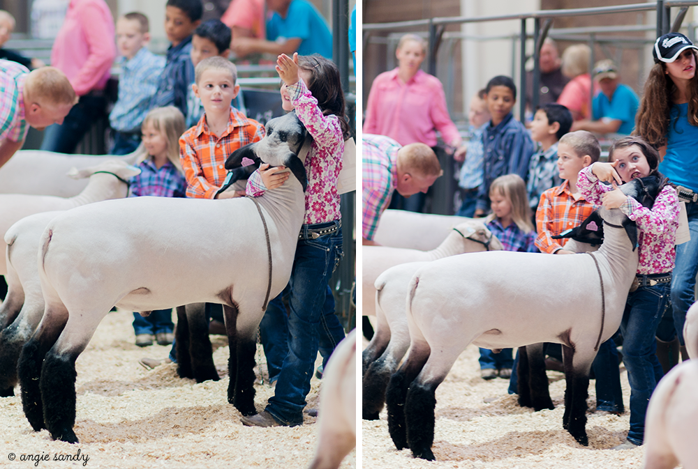 Photographing your kids showing sheep
