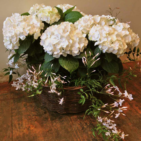 Planted Seasonal Basket Amanda Austin Flowers