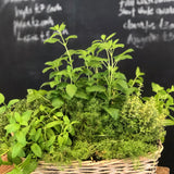 A Fragrant Herb Basket