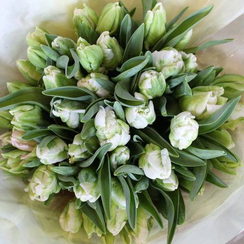 50 Stem Seasonal Tulip Bouquet Amanda Austin Flowers
