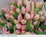 100 Stem Seasonal Tulip Bouquet